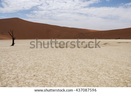 Lonely dead tree at Deadvlei, Sossusvlei, Namibia - stock photo