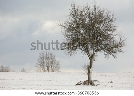 Lonely deciduous tree in wintertime snowy field against cloudy sky,Podlasie Region,Poland,Europe