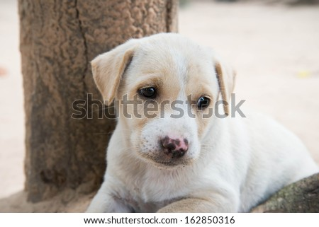 Lonely dog. - stock photo