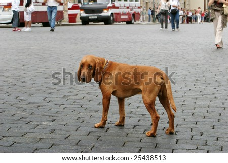 lonely dog in city - stock photo