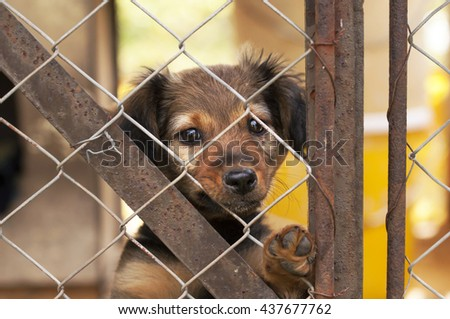Lonely dog puppy looking behind a fence - stock photo