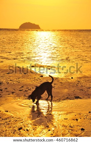 Lonely Dog Relaxing on The Sunset Beach