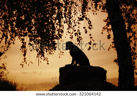 Lonely dog sitting under a tree in the evening - stock photo