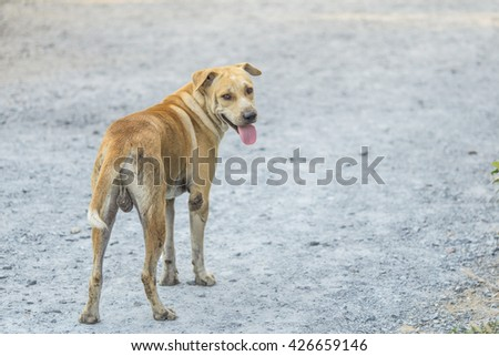 lonely homeless stray dog