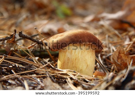 lonely mushroom on the earth