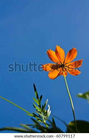 lonely orange flower - stock photo