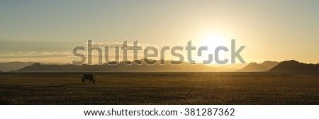 Lonely Oryx in the Namib Desert (Namibia) on the way to Sossusvlei - stock photo