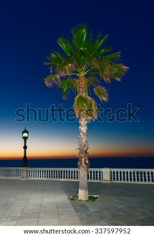 Lonely palm tree on the waterfront at sunset - stock photo
