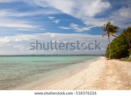 Lonely Palm Tree on tropical island sandy beach, resort waterfront beach landscape view, Cuba vacation, Cayo Guillermo