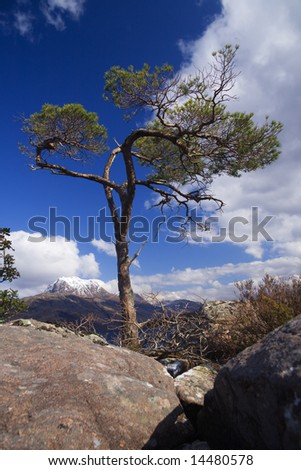 Lonely pine tree in boulders set against Scottish mountain