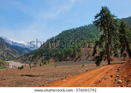 Lonely pine tree leaning over rocky roads  - stock photo
