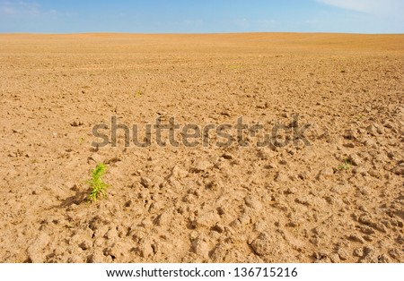 lonely plant on empty field of tilled land - stock photo