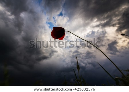 Lonely poppy flower profiled on stormy sky - stock photo