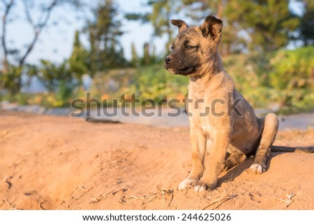 lonely puppy looking far away - stock photo