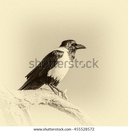 Lonely raven sitting on top of the tree in Sossusvlei plato of the Namib Naukluft National Park - Namibia, South Africa (stylized retro) - stock photo