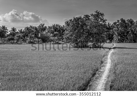 Lonely road in large field. Monochrome  - stock photo