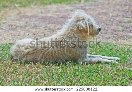 lonely roadside dog on grass - stock photo