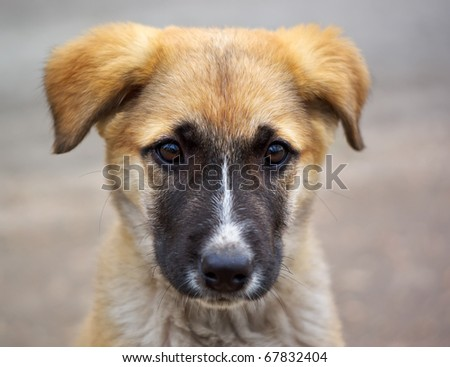 Lonely sad puppy. Emotional scene. - stock photo