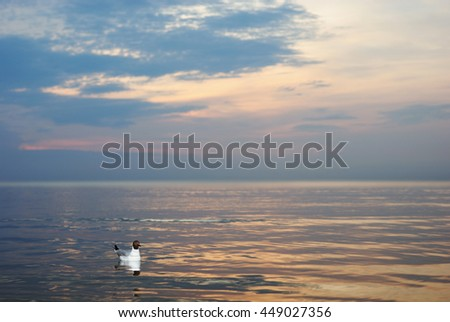 Lonely seagull on the  water surface of the Baltic Sea.