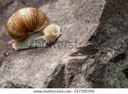 lonely snail close-up in nature in the summer