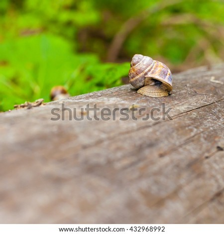 Lonely snail on a tree in a forest - stock photo