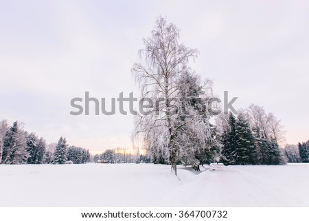 Lonely snowy tree. Winter landscape with lonely tree and snow field. Alone frozen tree in winter snowy field. Frosty winter day - snowy branch. - stock photo