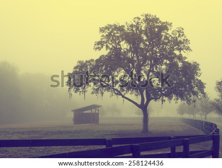 Lonely solitary grassy fenced in field meadow pasture with run-in shelter in fog looking depressing desolate bleak grim dramatic moody romantic pastoral serene calm rural with vintage retro filter - stock photo