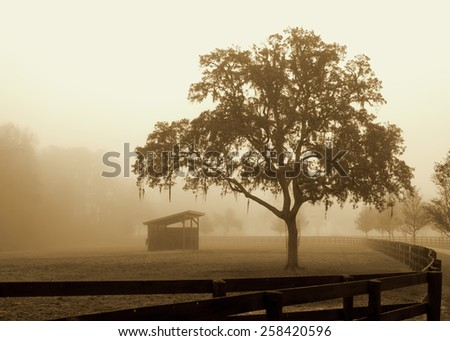 Lonely solitary run-in shelter in fenced grassy field meadow pasture in fog looking empty dismal depressing desolate bleak stark grim dramatic moody drab dim dull romantic pastoral serene calm rural - stock photo