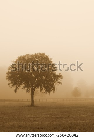 Lonely solitary tree in an open grassy field meadow pasture in the fog looking empty dismal depressing desolate bleak stark grim dramatic moody drab dim dull with sepia retro vintage filter - stock photo