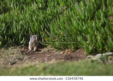 Lonely squirrel - stock photo