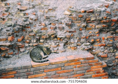 Lonely tabby brown stray cat sleeping outdoors under the ruined brick wall, cool toned
