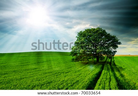 Lonely tree against a blue sky at sunset. - stock photo