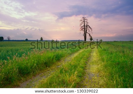 Lonely tree against at sunset - stock photo