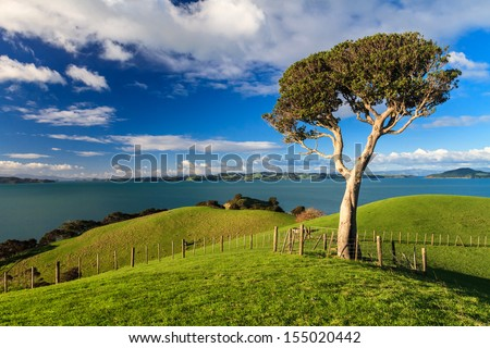 Lonely tree and blue sky, Duder Regional Park, Auckland, New Zealand - stock photo
