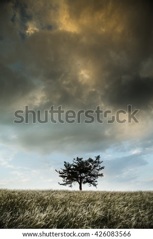 Lonely tree and feather grass field - stock photo
