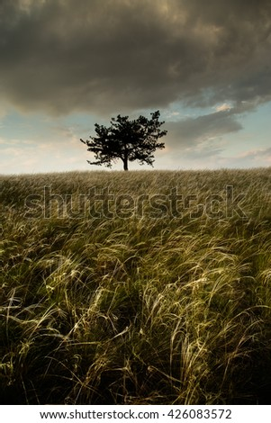 Lonely tree and feather grass field