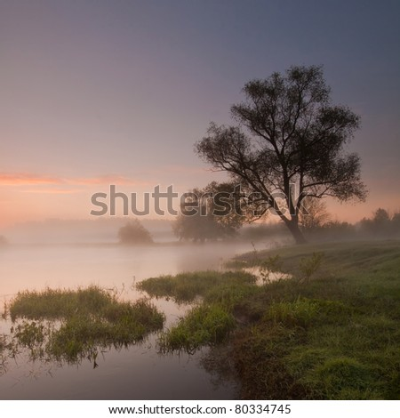 Lonely tree at  colorful, misty sunrise near the river. - stock photo
