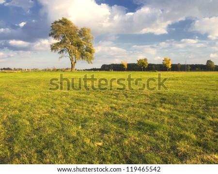 lonely tree at sunset - stock photo