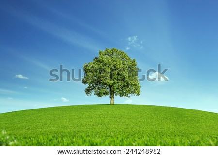 Lonely tree at the empty green field with copy space - stock photo