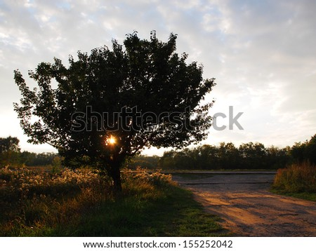 lonely tree at the road on sunset  - stock photo