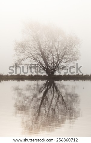 Lonely tree by the lake in the misty sunrise - stock photo