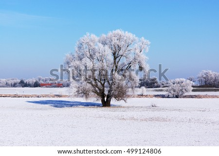 Lonely tree in a field on a sunny day in winter
