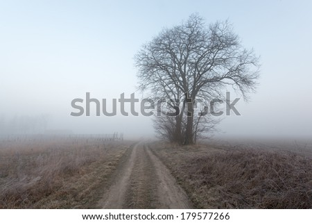 Lonely tree in a field with road - stock photo