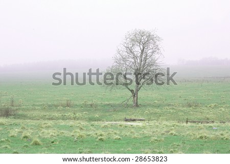 Lonely tree in a fog