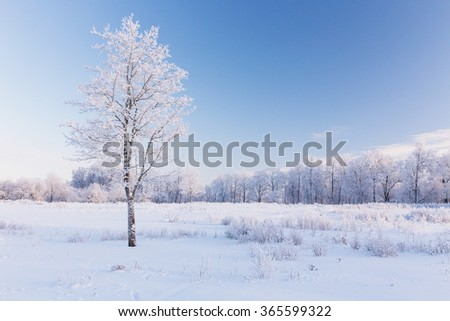 lonely tree in a snow-covered field - stock photo