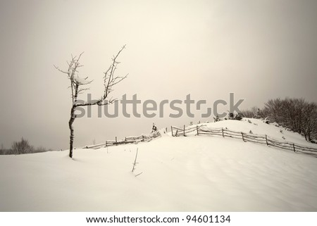 Lonely tree in a snowy field in front of an old wooden fence covered with snow - stock photo