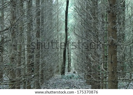 Lonely tree in a thicket - stock photo