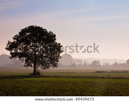 Lonely tree in agricultural landscape during morning mist - stock photo