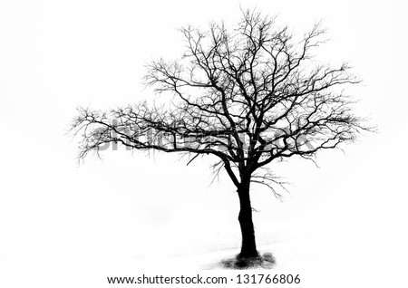 Lonely tree in black and white - stock photo