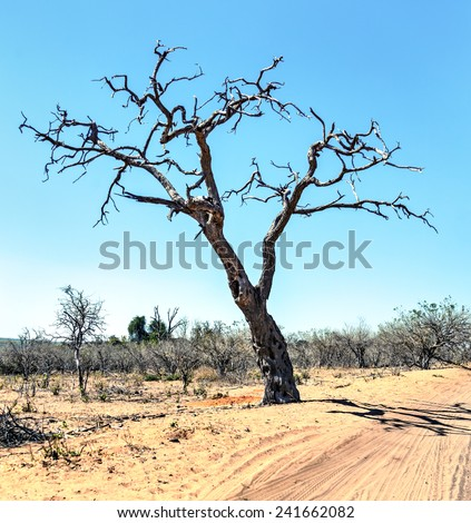 Lonely tree in Chobe National Park - Botswana, Southen-West Africa - stock photo